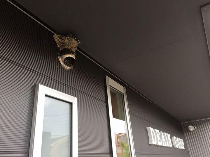 今年は初めて会社の軒下に燕さんが巣を作り「幸せ」を運んで来て頂いてます♪